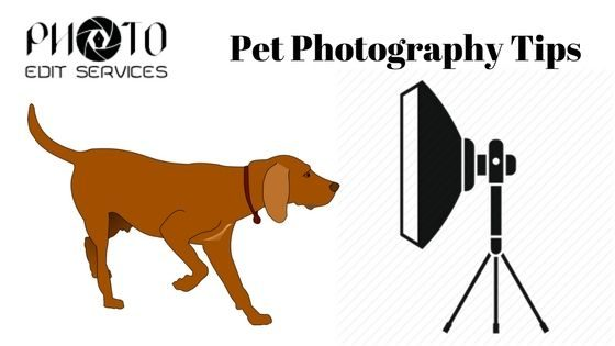 Pet Photography pro Tips